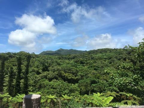 亜熱帯の森 全景