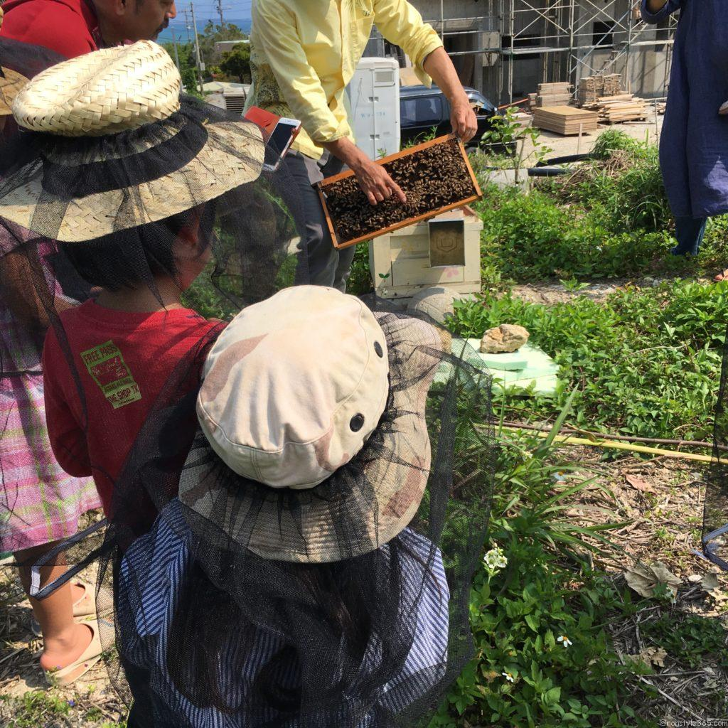 こどもと一緒に学ぼう!沖縄首里の新垣養蜂場3代目が教えるミツバチの世界